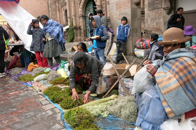 Andean Christmas plants