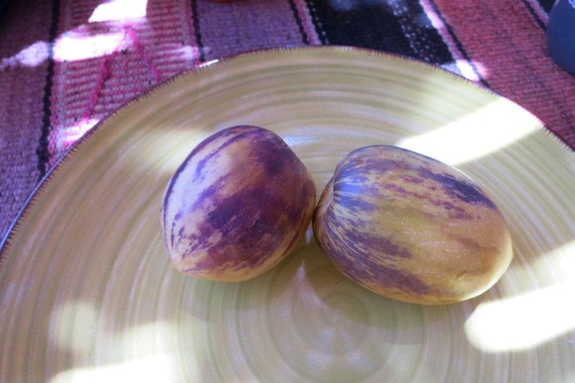 Food of the desert Pepino Dulce