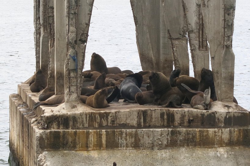 Valparaiso seafood sea lions