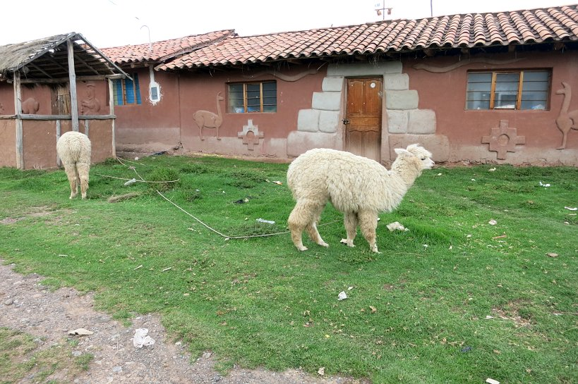Cusco specialties Alpaca