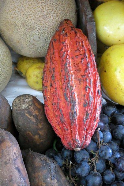 Strange fruits cacao