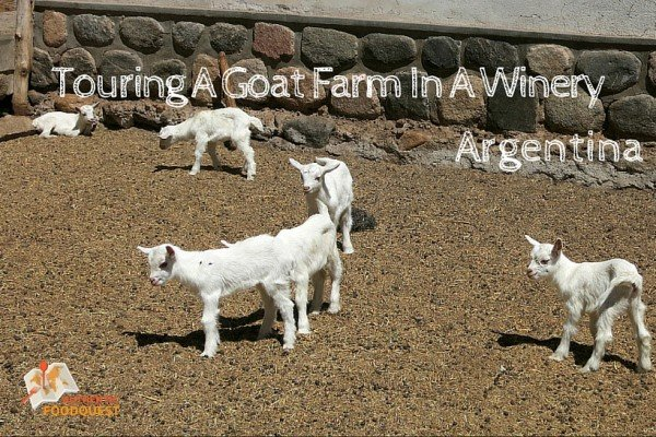 Goat Farm Cabras de Cafayate Authentic Food Quest