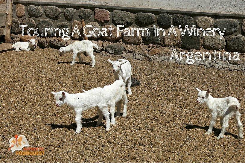 Goat Farm Cabras de Cafayate Authentic Food Quest