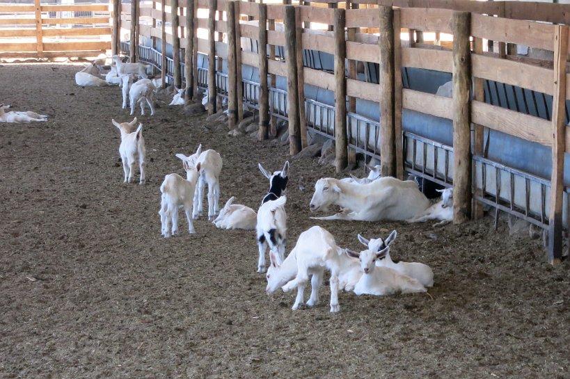 Goat Farm Barns Cabras de Cafayate Authentic Food Quest
