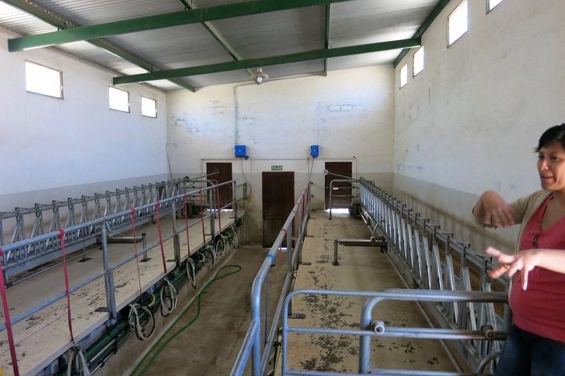 Goat Farm Dairy Tour Cabras de Cafayate Authentic Food Quest