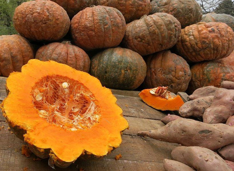 Pumpkin Montevideo Authentic Food Authentic Food Quest