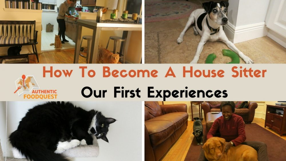 how to become a professional house sitter