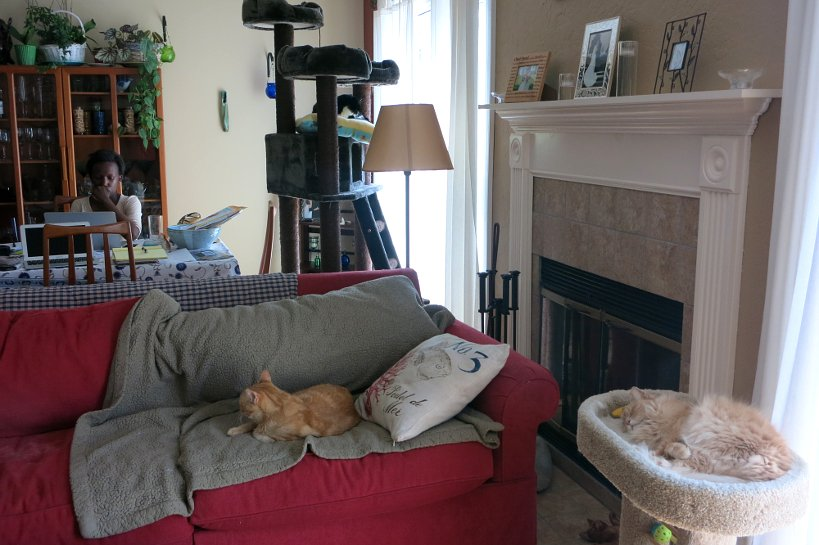 Picture of First house sitting experience with 4 cats (2 in picture) by authentic food quest