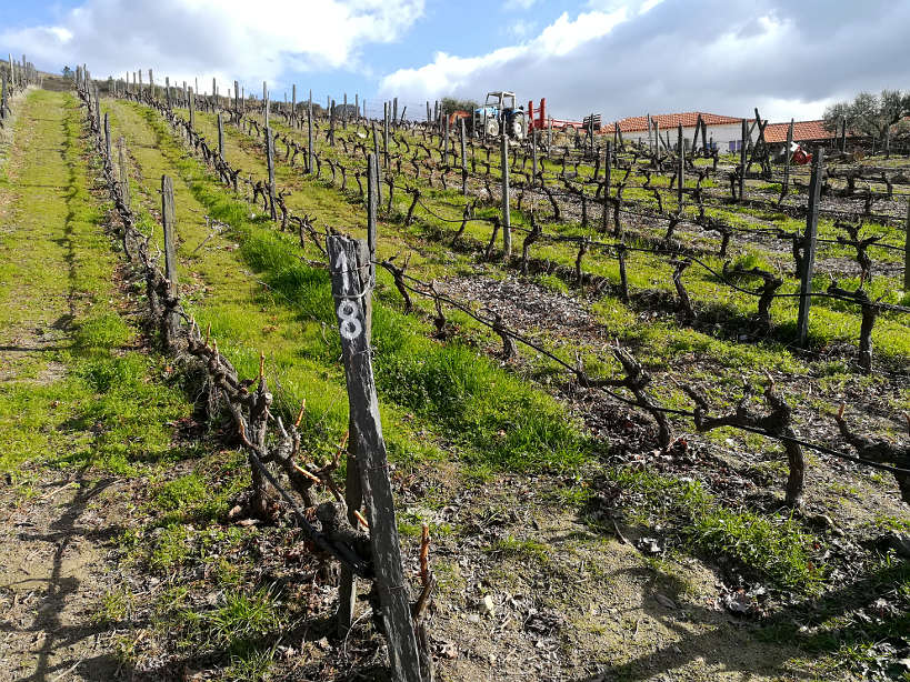 Douro Valley Tours of Quinta Nova for the best Douro Valley wines by Authentic Food Quest