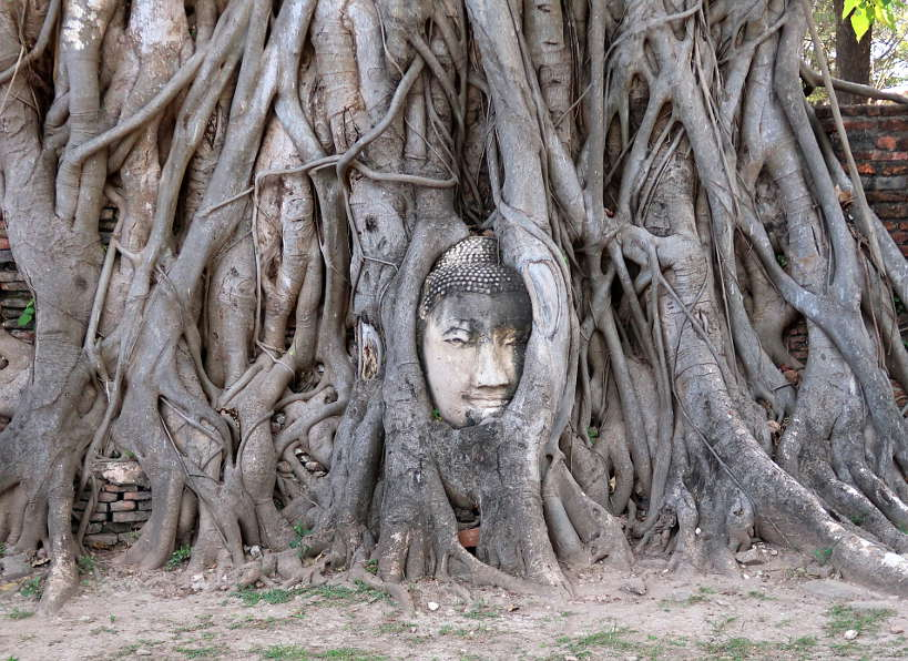 Wat Mahathat and the Giant Buddha Head in the Tree for Ayutthaya Day Tour by Authentic Food Quest. You cannot miss capturing this image on your Ayutthaya tour