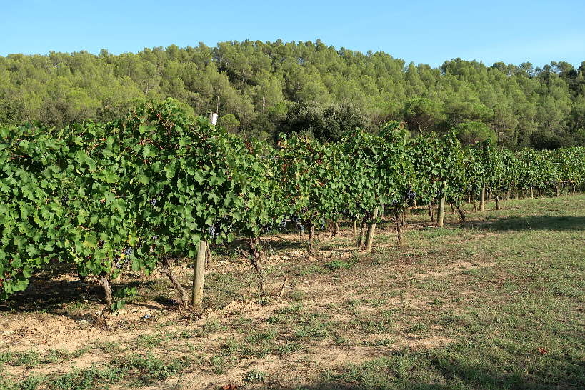 Vineyards at Eccocivi Winery producing Catalan Wines AuthenticFoodQuest