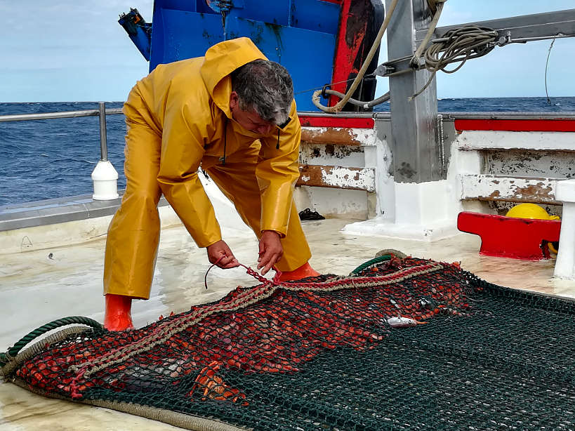 Catching Gambas de Palamos Spain Authentic Food Quest