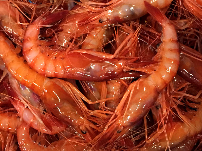 Gambas de Palamos in Spain by AuthenticFoodQuest