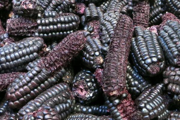 Maiz morado in mazamorra morada recipe by Authentic Food Quest