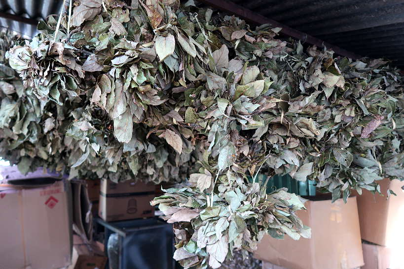 Avocado leaves drying at Central Abastos in Oaxaca Mexico by Authentic Food Quest