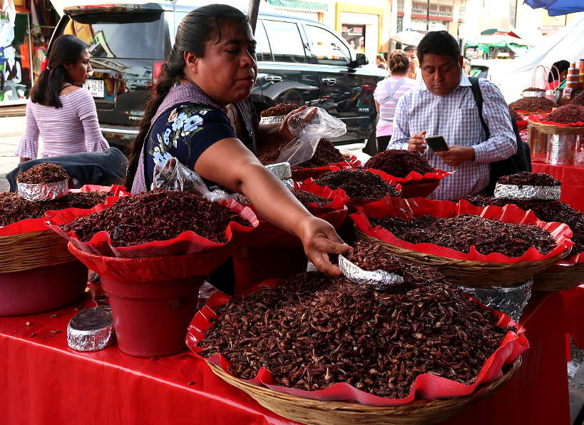 Chapulines Oaxaca food by Authentic Food Quest
