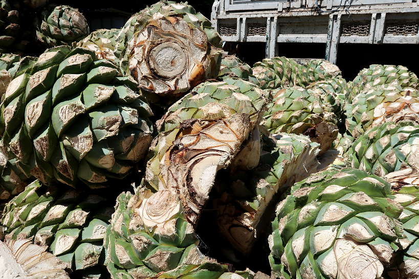 Agave pina in the mezcal distillery process by Authentic Food Quest