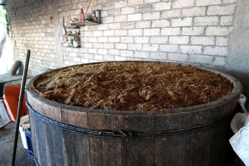 Fermentation process on mezcal tour oaxaca by Authentic Food Quest