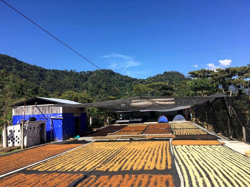 Finca Chelin Farm for Oaxaca Coffee by Authentic Food Quest