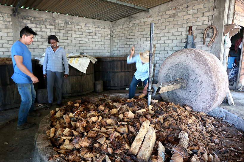 Geü Beez Mezcal distillery visit Oaxaca Mezcal Tour by Authentic Food Quest