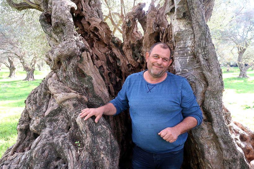 Manolis in his ancient olive grove in Pigi Crete by Authentic Food Quest