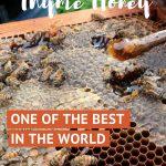Cretan Honey by AuthenticFoodQuest