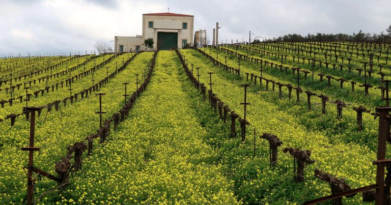 6 of the Best Wineries in Crete to Enjoy Indigenous Wines from Greece