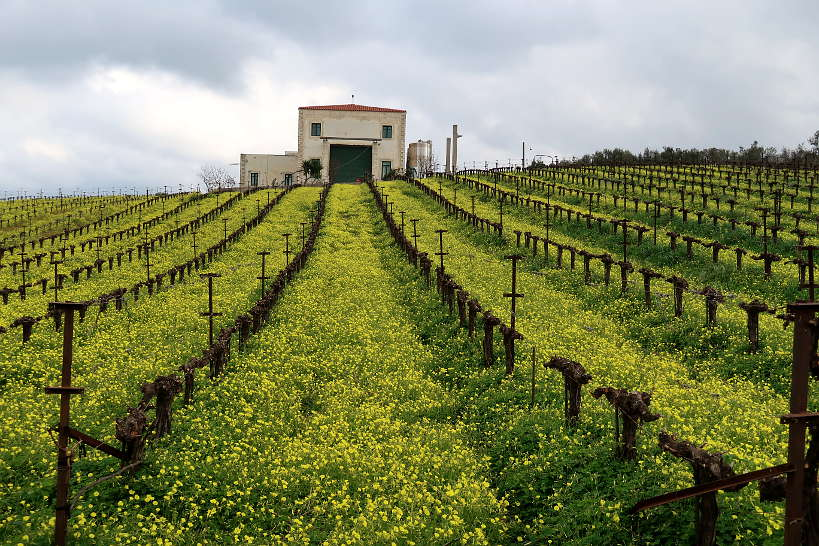 Loupakis Winery and vineyard Crete by Authentic Food Quest