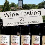 Pinterest Plantaze Wine by Authentic Food Quest