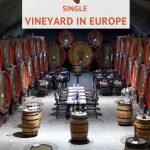 Pinterest Plantaze Winery by Authentic Food Quest