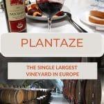 Pinterest Plantaze by Authentic Food Quest