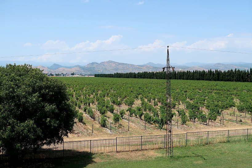 Plantaze Vineyard by Authentic Food Quest